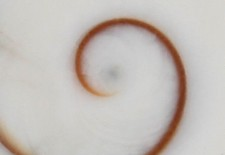 Shiva's Eye