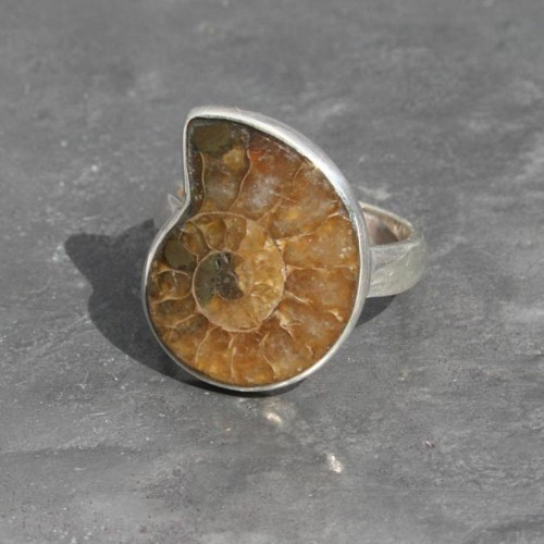 Ammonite small ring
